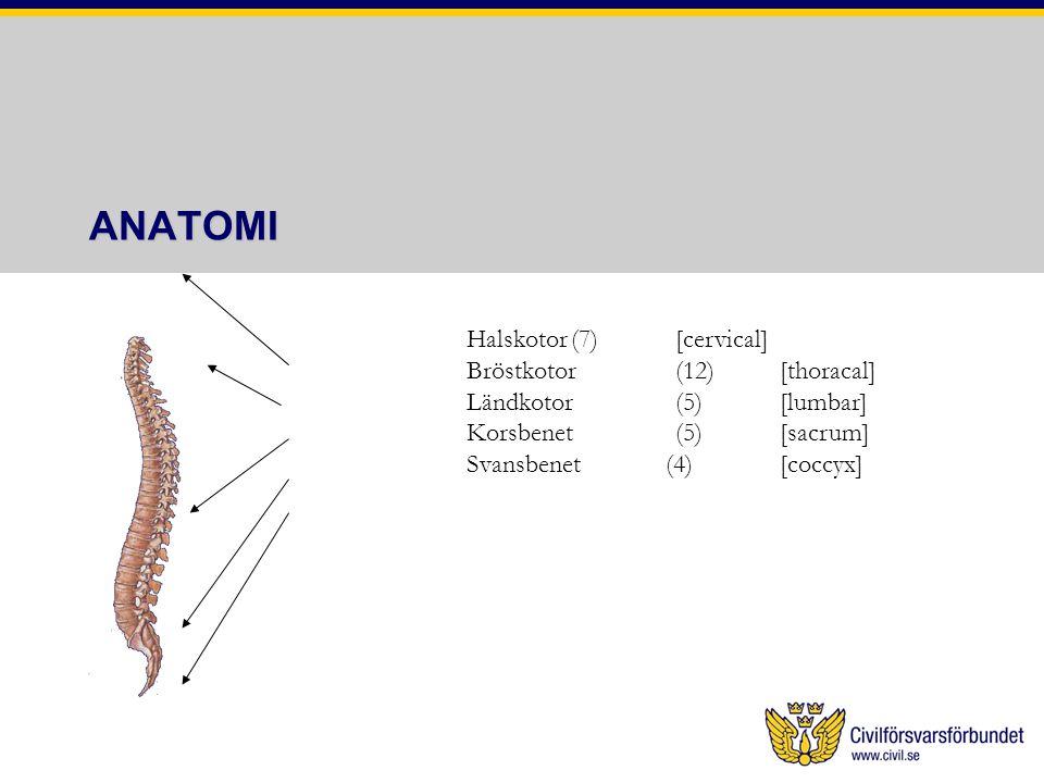 ANATOMI Halskotor (7) [cervical] Bröstkotor (12) [thoracal]